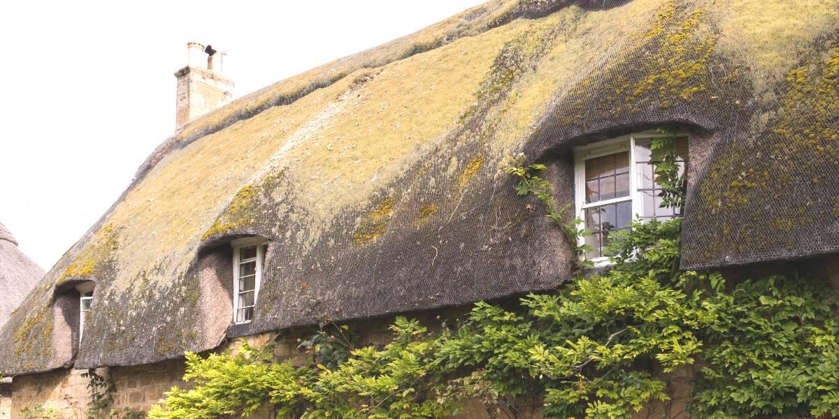 rieten dak onderhouden